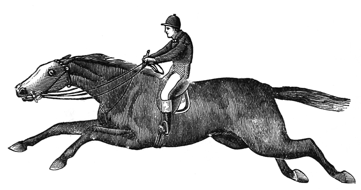 racehorse with jockey