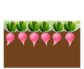radish vegetable garden bed clipart