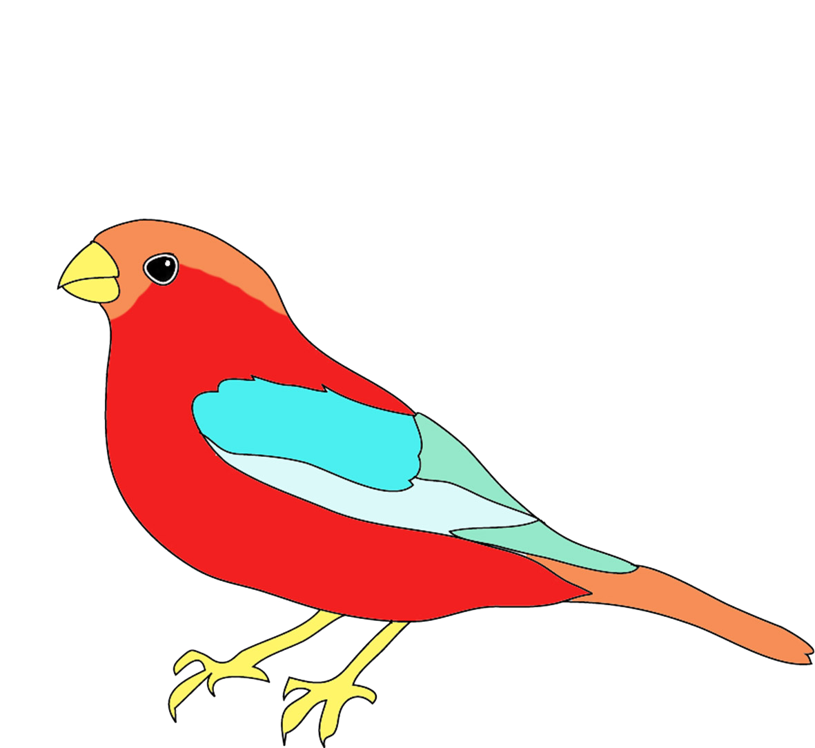 how to draw a colorful bird