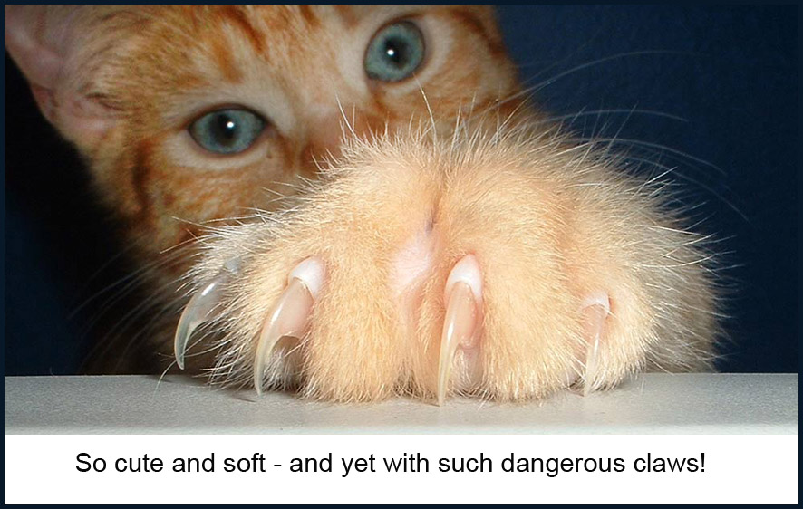 red cat with claws