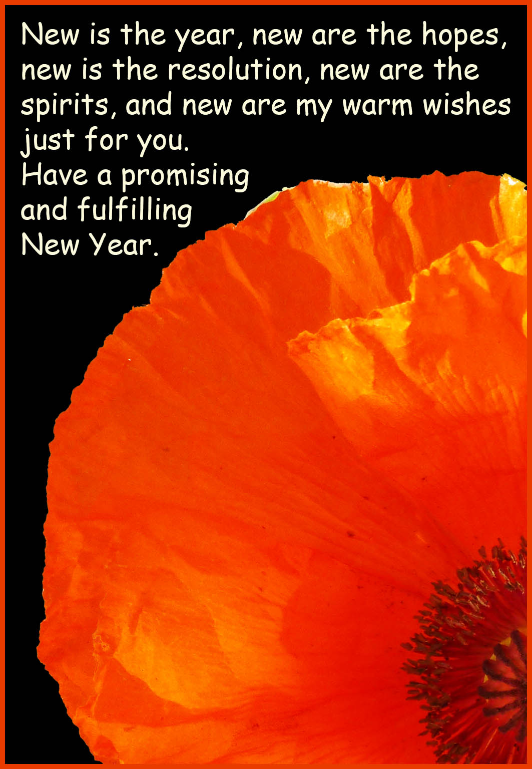 New Year card with red poppy