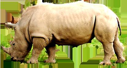 rhinoceros clip art