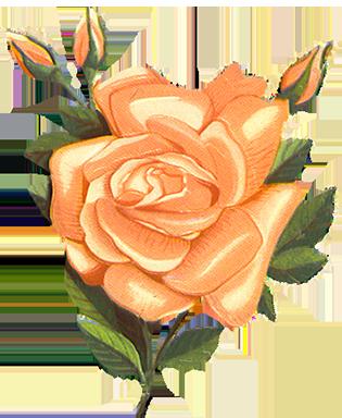 vintage-rose clipart