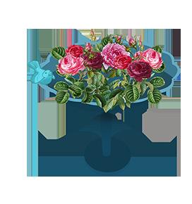 blooming roses in birdbath
