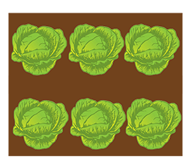 salad bed clipart