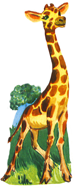 scrap image of giraffe