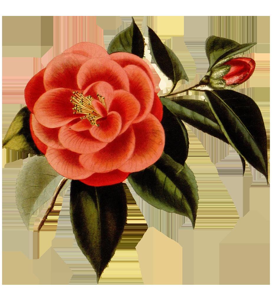 scrapbooking red flower
