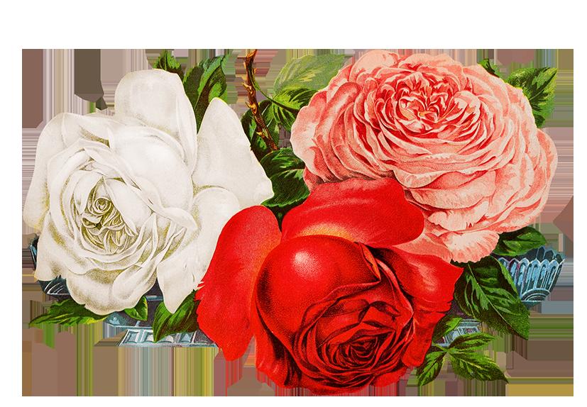 scrapbooking roses