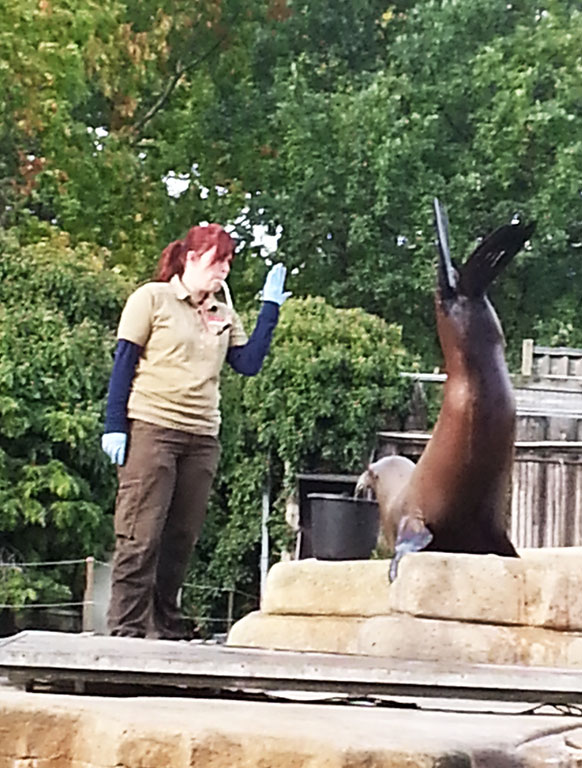 sea lion training