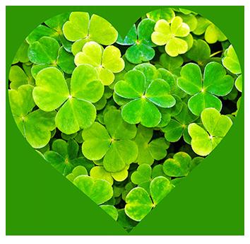 heart of shamrock
