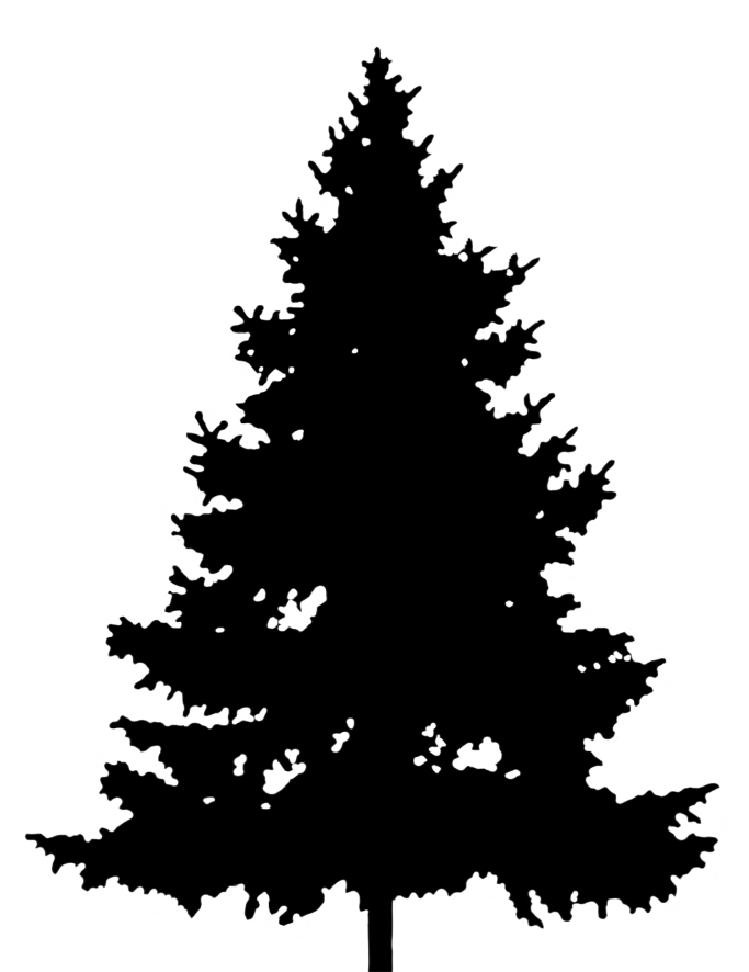black silhouette of christmas tree