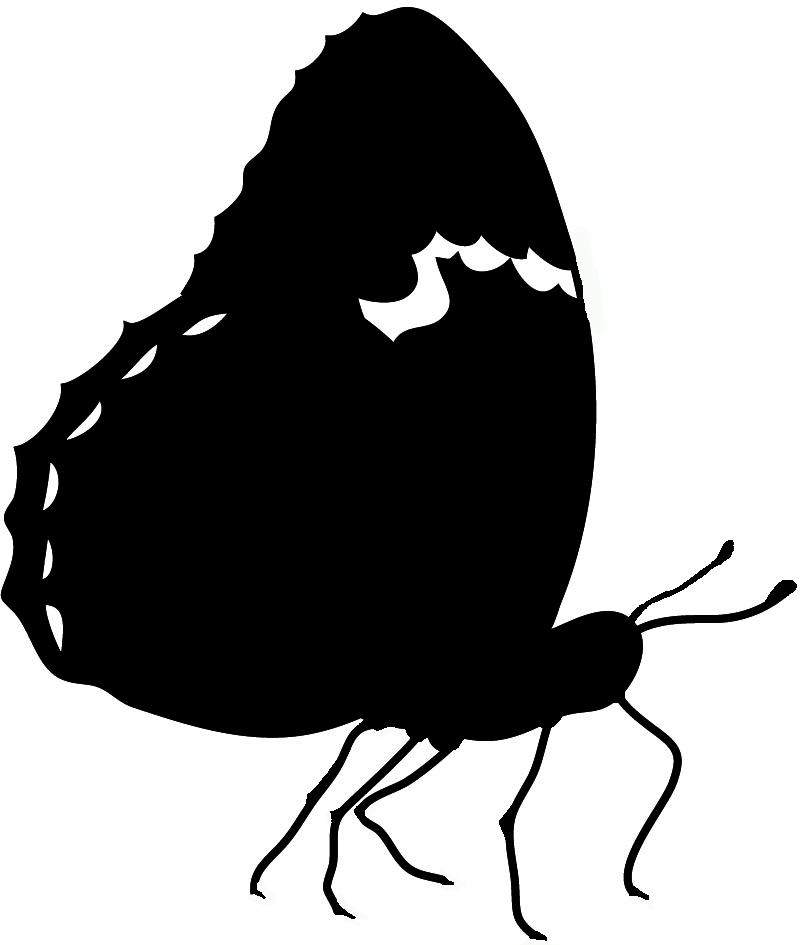Butterfly silhouette black white