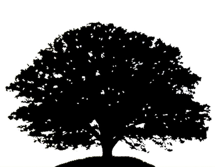 tree silhouette oak tree