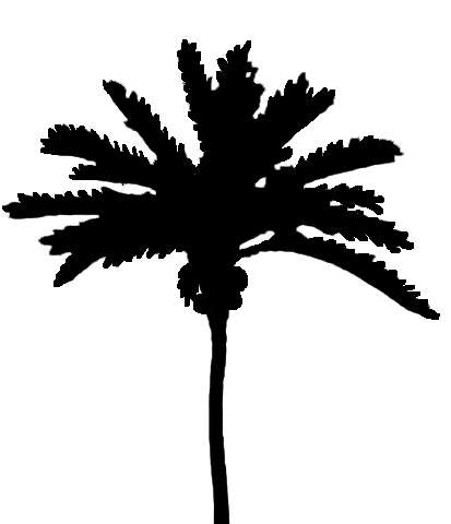 silhouettes of palm trees black