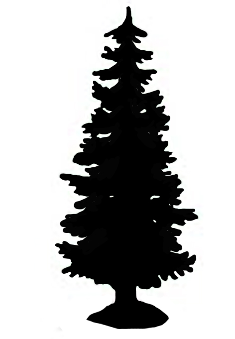 Black silhouette of tall spruce