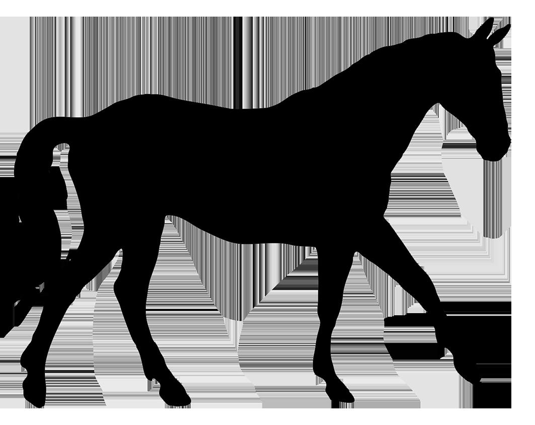 silhouette of elegant horse