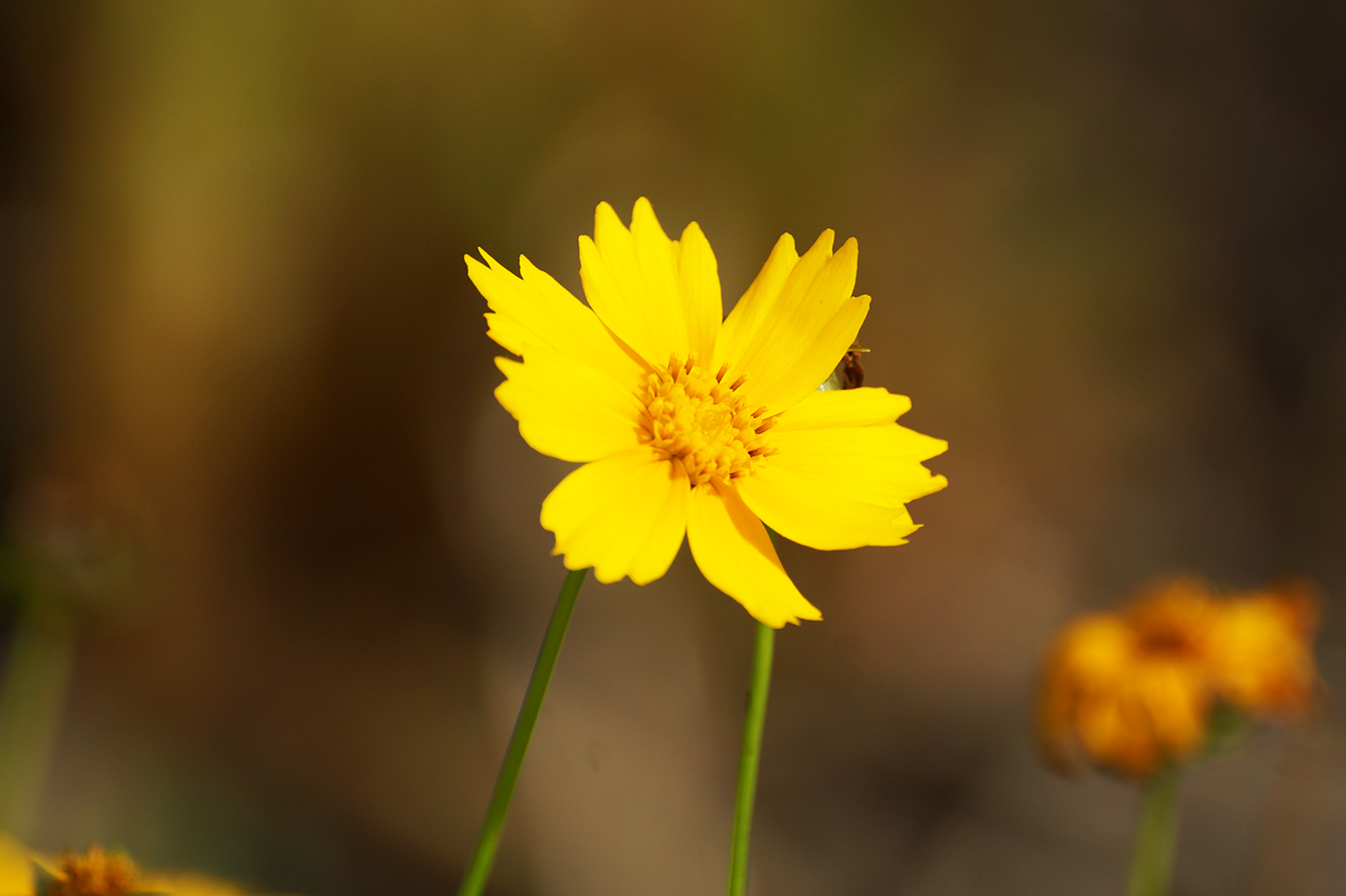 simple yellow flower photo