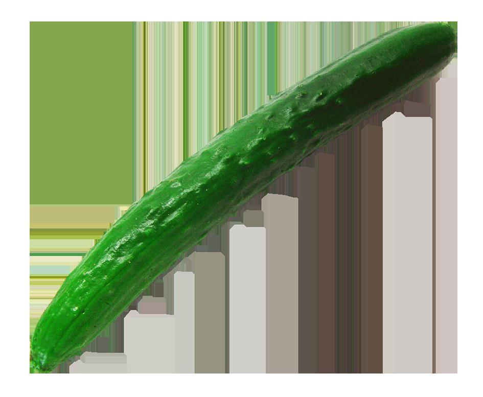 single cucumber clipart