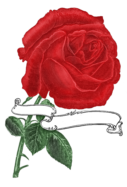 single red rose with banner