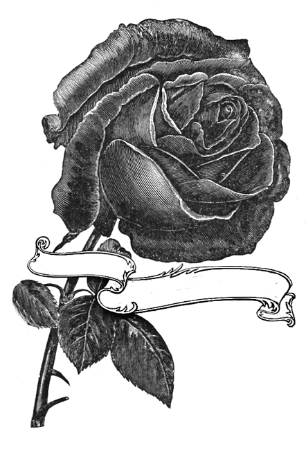 single rose sketch with banner
