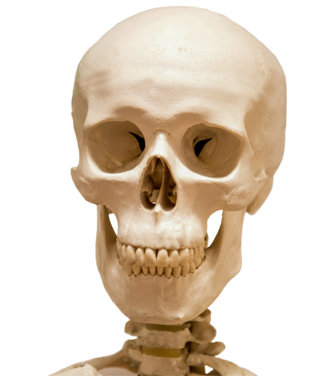 head skull and part skeleton