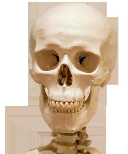 head skull and part skeleton
