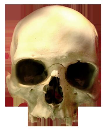 skull images human skull