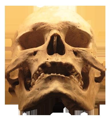 skull clip art human skull
