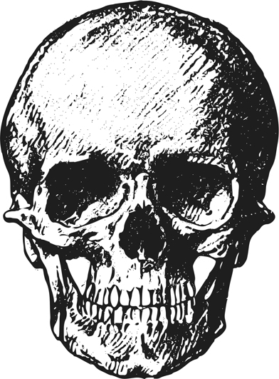 frontal skull drawing