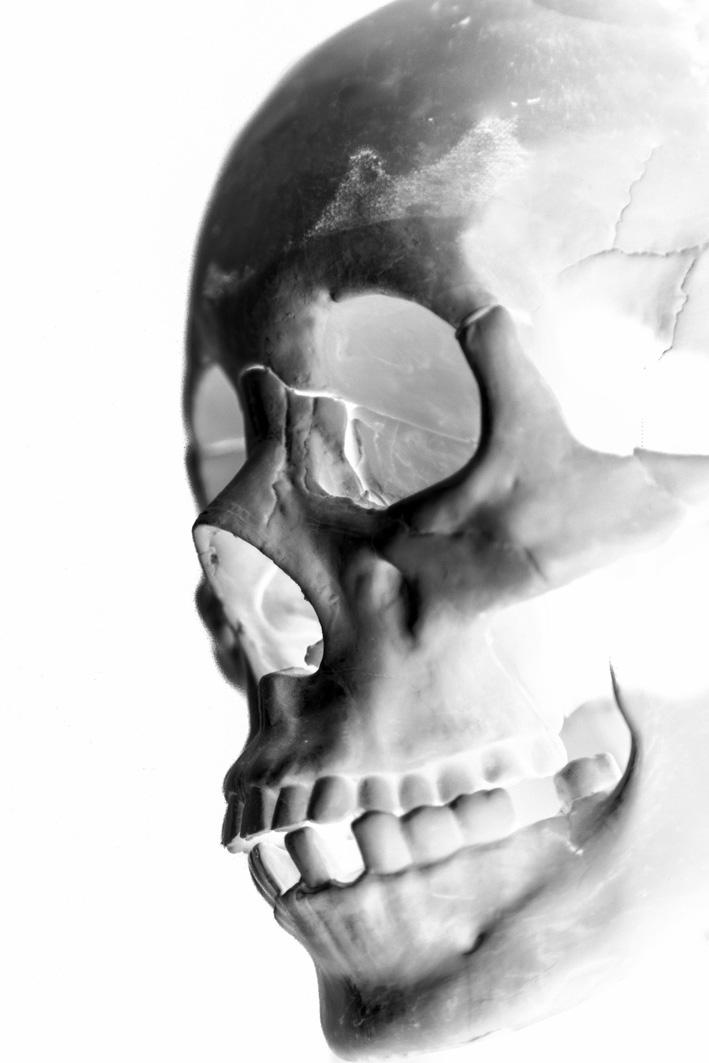 skull images sideways