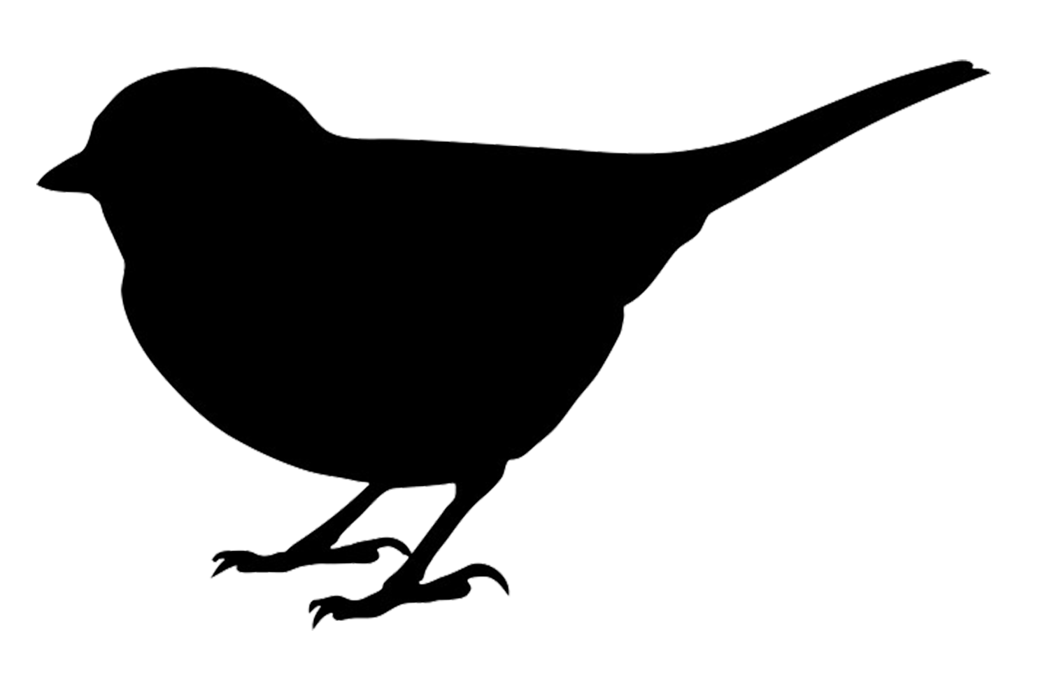 small bird black silhouette