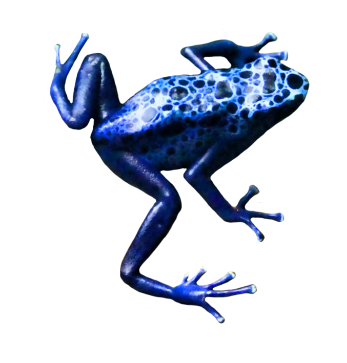 small blue frog
