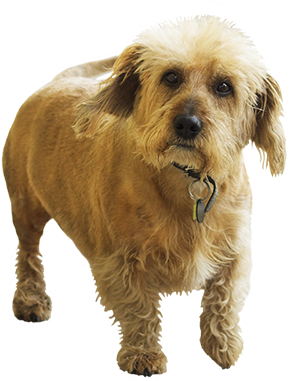 small brown dog clipart
