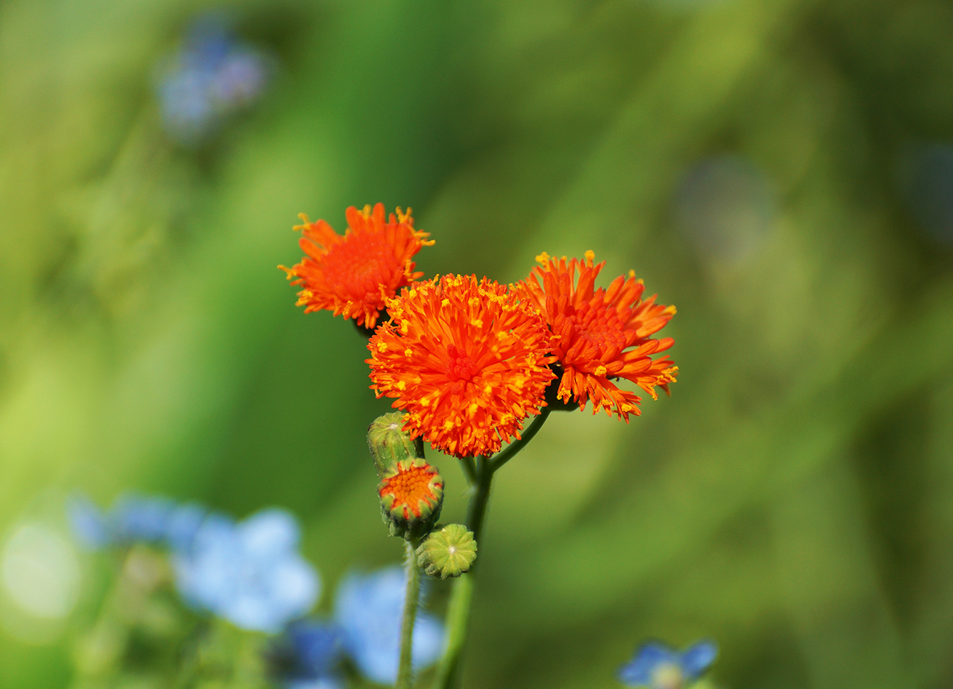 small orange flower photo
