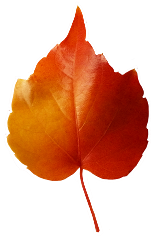 small red yellow leaf clipart
