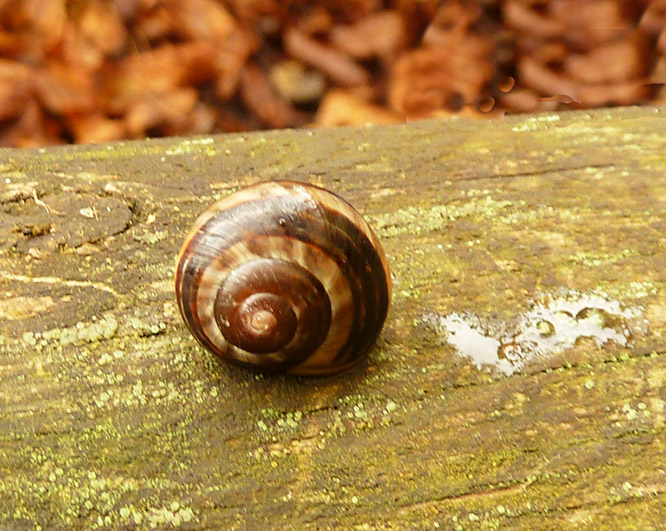 snail on wood after rain