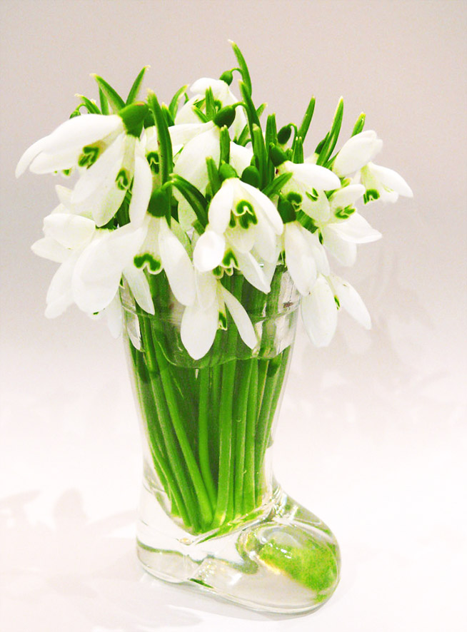 snow drops in vase