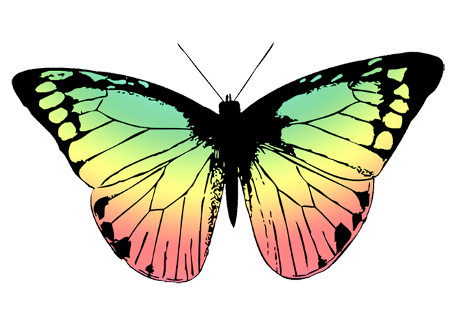 butterfly with soft colored wings