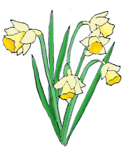 spring clip art daffodils