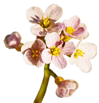 Spring clipart spring flower pictures spring flower clipart - Flowers that bloom from spring to fall ...
