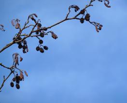 spring clipart blue sky tree