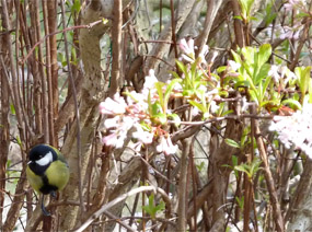 Earsy spring, tit and flowers