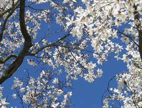 spring pictures magnolia
