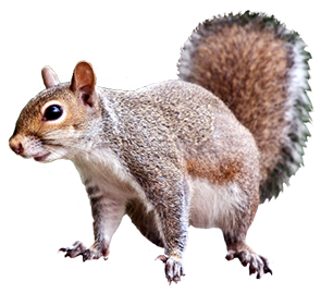 cute squirrel animal graphic