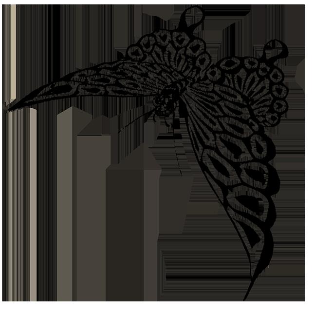 Japanese butterfly sketch