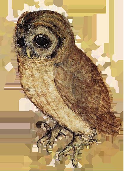 sweet little owl drawing