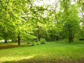 summer clipart green landscape