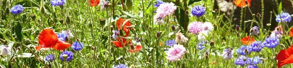 border of wild summer flowers