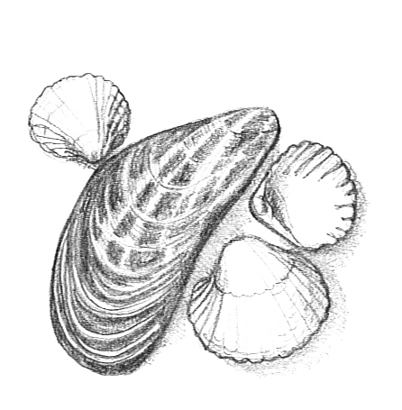 mussel and cockles clip art