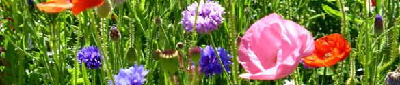 summer clip art typical summer flowers